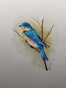 watercolorbluebird